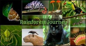 Life Science Curriculum Rainforest Journey from EdTechLens 1